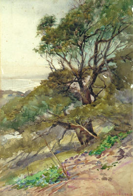 NZ Coast Scene - Large tree(s) in foreground