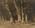 Beech Trees- Wakatipu