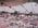 Crystallized fallen pine, saltworks boundary