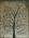 Copper wire evolutionary tree (The Birds)
