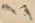 Untitled (bird study)