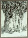 Untitled (Trees, Matai River Road)