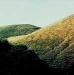 Wanganui Colour Work no. 9