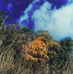 Wanganui Colour Work no. 3