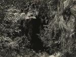 The Caves, Wanganui River