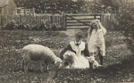Untitled (woman and Frank Denton's daughter Mary feeding three lambs)