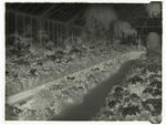 Black and white negative of Panorama of Winter Gardens (two of two) [this is the negative for 1996/11/13]