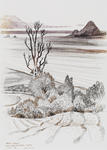 Untitled (Maire Island from Whakatane Cliffs)