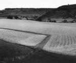 Track in Field, Kai Iwi, 1985