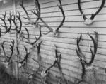 Antlers, Ahaura, Westland