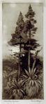 Mountain Cypress