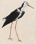 Untitled (Black and White Bird)