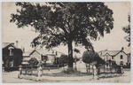 Postcard of the Oak Tree, Newton Abbot, From Margaret MacPherson to Edith Collier.