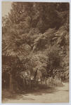 "Postcard of a bush walk. Possibly titled ""Zigzag"" from Uncle Arthur to Edith Collier."