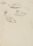 Untitled (Duck and swan)