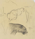 Untitled (Hunting leopard and leopard)