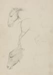 Untitled (Horse and donkey)
