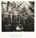 Referencing the Art History of Photography: Edward Curtis (American): Green-house, Bushy Park, Kai Iwi