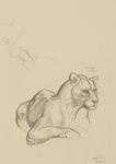 Untitled (Hunting leopard)