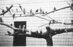 Zoo Music: Birds, Auckland Zoo