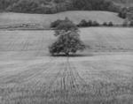 Near Manzac, France 1984