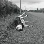 Dead Steer